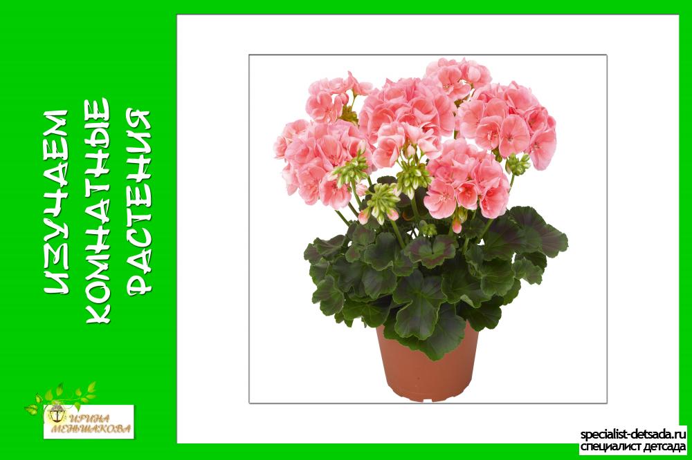Комнатные растения в детском саду схема ухода