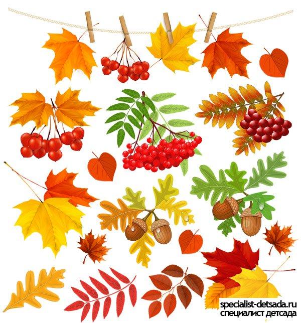 Осенние листья картинки для детей на прозрачном фоне